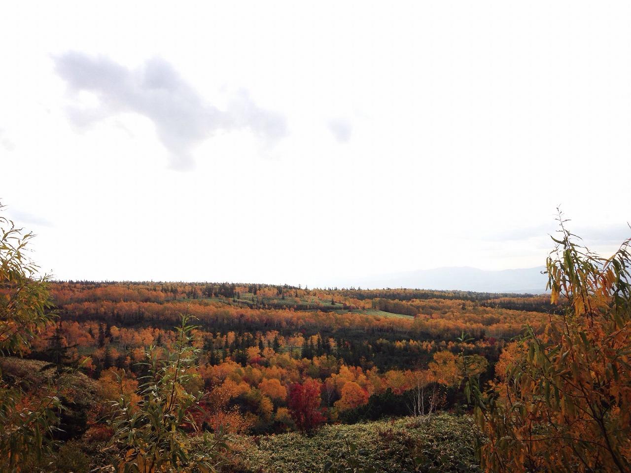 十勝岳連峰の紅葉
